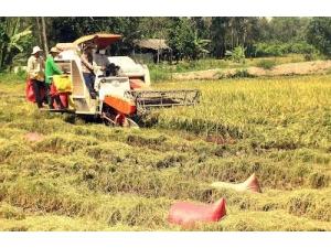 Thị trường gạo thế giới tăng cầu, Việt Nam tăng mục tiêu xuất khẩu
